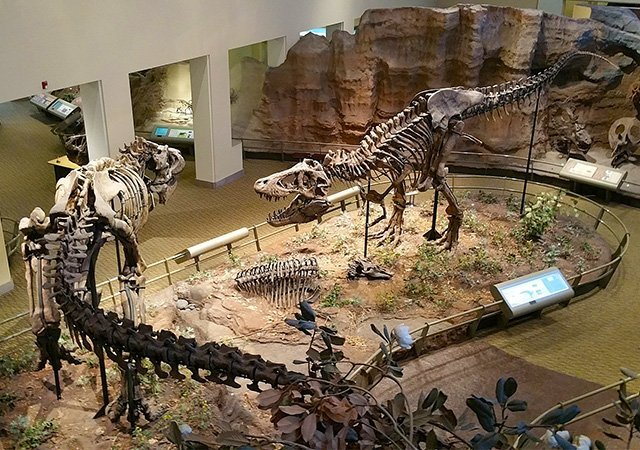 Carnegie-Museum-of-Natural-History
